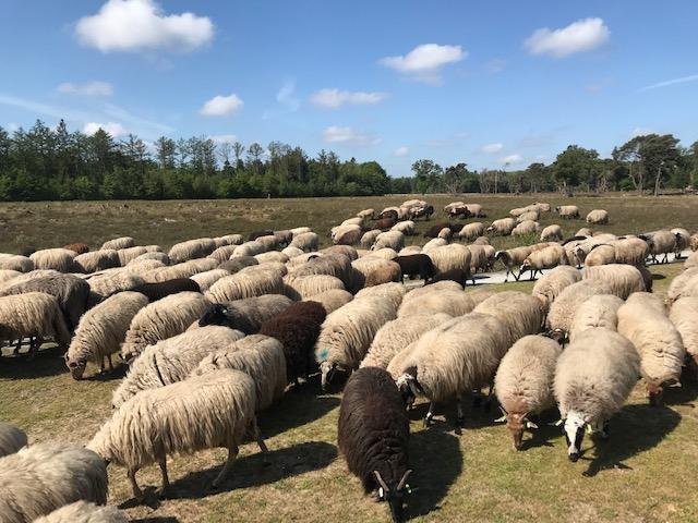 Yoga in Drenthe in de natuur
